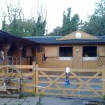 horsesforsale009